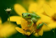 The Frog Prince Stock photo [735681] Frog