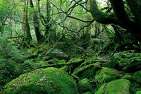 Forest of Princess Mononoke Stock photo [736273] World