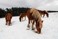 Cold start-horse Stock photo [736305] Horse