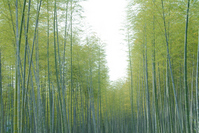 Bamboo Stock photo [738119] Bamboo