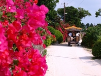 Road of Taketomi of hackery and flowers Stock photo [738635] Taketomi