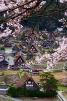 Cherry bloom spring Shirakawa-go Stock photo [801274] Spring