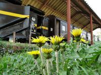 Nihon dandelion and locomotive Stock photo [804115] Nihon