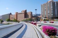 Takarazuka city Stock photo [804802] Azalea