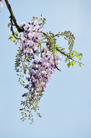 Rattan Stock photo [806358] Flower
