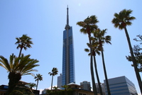 Palm trees and Fukuoka Tower Stock photo [810482] Palm