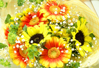 Gar Bella and sunflower bouquet of Stock photo [810526] Flower