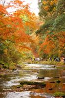 Yōrō Keikoku Okukiyosumi Prefectural Natural Park Stock photo [810522] Keikoku