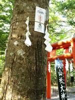 Ayala mountain shrine Okumiya of sacred tree Stock photo [973362] Oyama