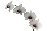 Orchid Stock photo [976735] Orchid