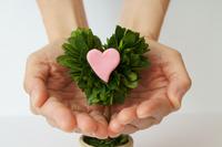 Feeling heart that I want to tell Stock photo [1084667] Foliage