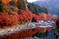 Autumn leaves of Koarashi River Stock photo [1088375] Autumn