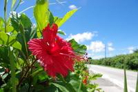 Hibiscus Stock photo [1093355] Hibiscus