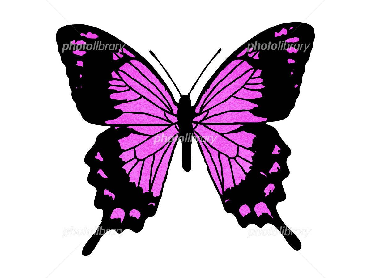 ピンクの蝶 イラスト素材 1198325 フォトライブラリー Photolibrary