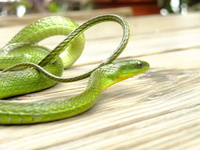 Surprisingly cute snake Stock photo [1200380] Blue