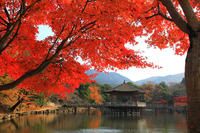Of autumn leaves Nara Park 浮見-Do Stock photo [1201527] Autumn