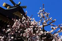 Bunkyo Yushima Tenmangu white plum Stock photo [1289606] Yushima