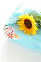 Summer image of sunflower Stock photo [1378846] Sunflower