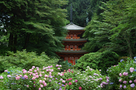 Kyoto Gansenji hydrangea and triple tower Stock photo [1380537] Iwafune-Temple