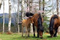 Foals and Family Stock photo [1381172] Shinshu
