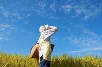 Agricultural work of break Japanese woman in a rice field Stock photo [1383725] Female