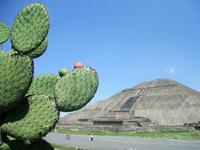 Tio tee Wakan and cactus Stock photo [1384883] Tio