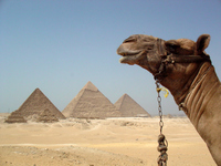 Pyramids and camel Stock photo [1384915] Pyramid