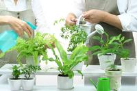 Couple to enjoy gardening hobby Stock photo [1385821] Lifestyle