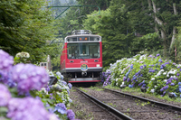 Hakone Tozan and hydrangea Stock photo [1471089] Hakone