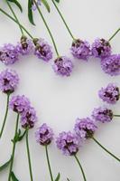 Heart-shaped lavender Stock photo [1473274] Heart-shaped