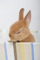 Rabbit and accessories Rabbit