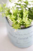 Roxas image Stock photo [1574375] Plant