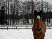 Snow and horses Stock photo [1575358] Horse