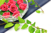 Rose and Ivy Stock photo [1576049] Rose