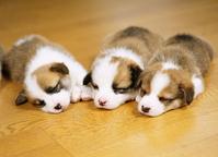 Puppy Puppies