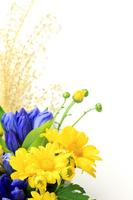 The Chrysanthemum and the gentian Stock photo [1579454] Chrysanthemum