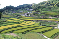Hyogo Sayo B Okidani of terraced rice fields of Stock photo [1579851] Hyogo