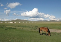 One horses grazing of Mongolian grassland Stock photo [1582587] Mongolia