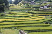 Hyogo Sayo B Okidani of terraced rice fields of Stock photo [1583574] Hyogo