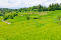 Nagano Prefecture Iida Yokone rice paddy Stock photo [1584046] Nagano
