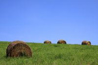Grass roll Stock photo [1584584] Field