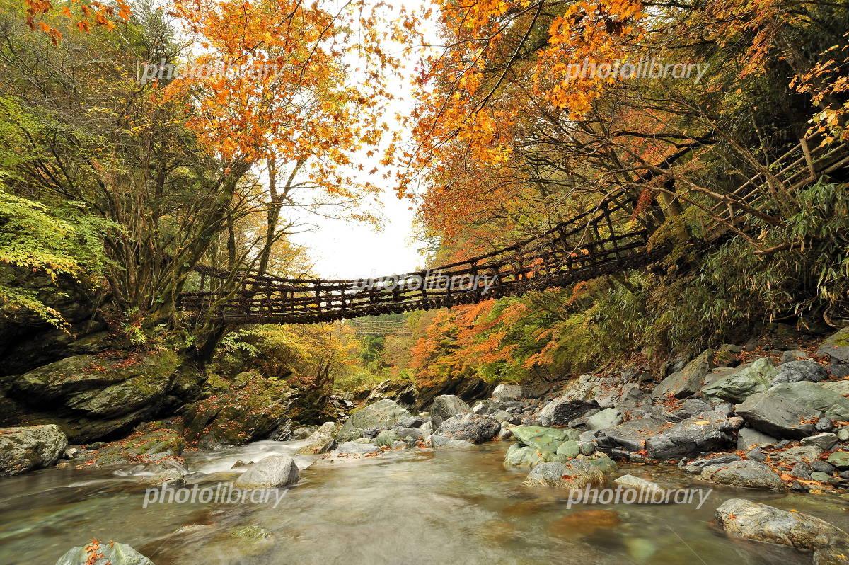 秋の奥祖谷かずら橋 女橋と男橋の写真 無料 フリー