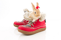Shoes and Santa rabbit Stock photo [1684028] Rabbit