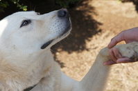 Dog to your hand Stock photo [1757139] Dogs
