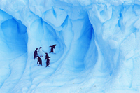 Iceberg of Adelie penguin Antarctic Stock photo [1758158] Landscape
