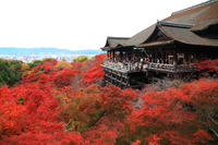 Autumn leaves of Kiyomizu Temple stock photo