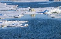 Arctic Polar Bear Polar Bear Stock photo [1759293] Landscape