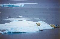 Arctic Polar Bear Polar Bear Stock photo [1760359] Landscape