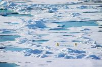 Arctic Polar Bear Polar Bear Stock photo [1760552] Landscape