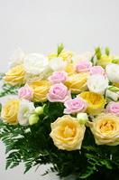 Close-up of rose Stock photo [1847790] Rose